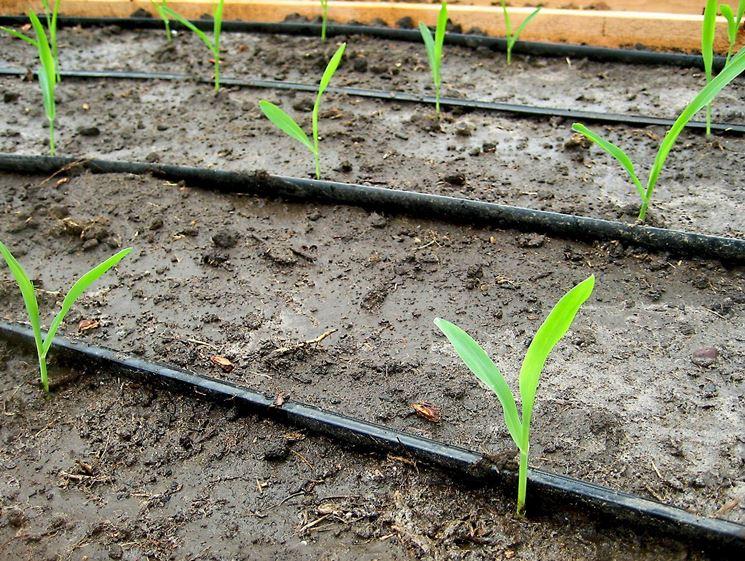 irrigazione orto coltivare orto come irrigare l 39 orto
