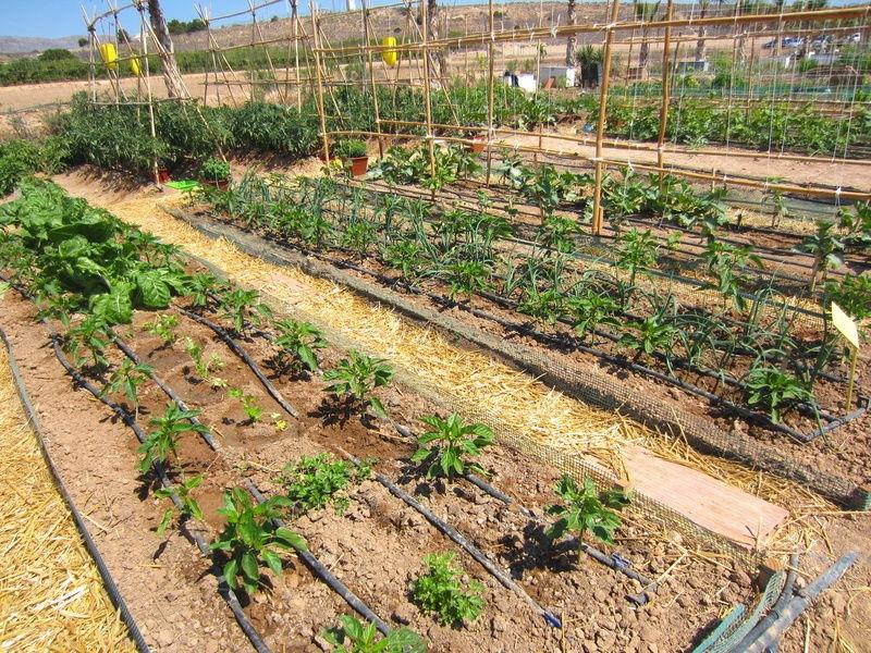 Irrigazione orto coltivare orto for Impianto irrigazione orto