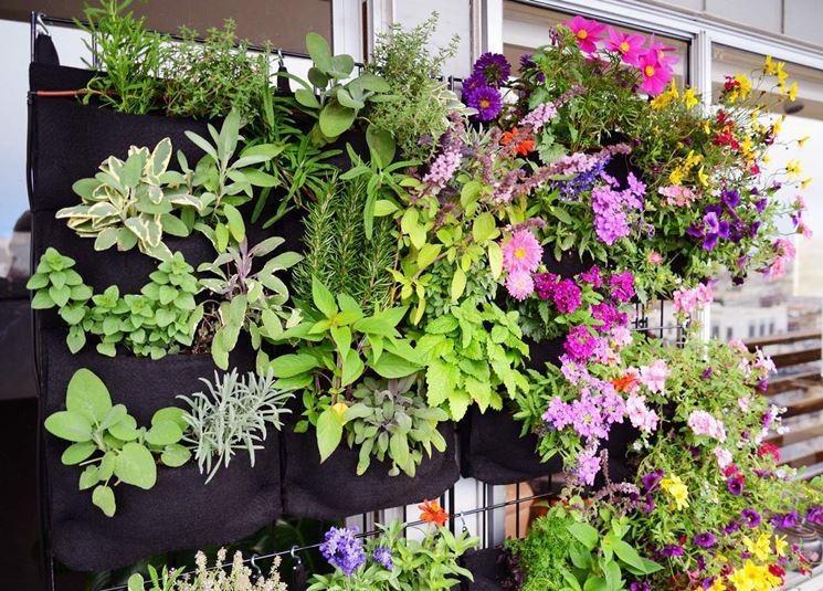 Piante aromatiche fiori verticale