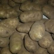 """patate"""