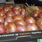 Semina cipolle