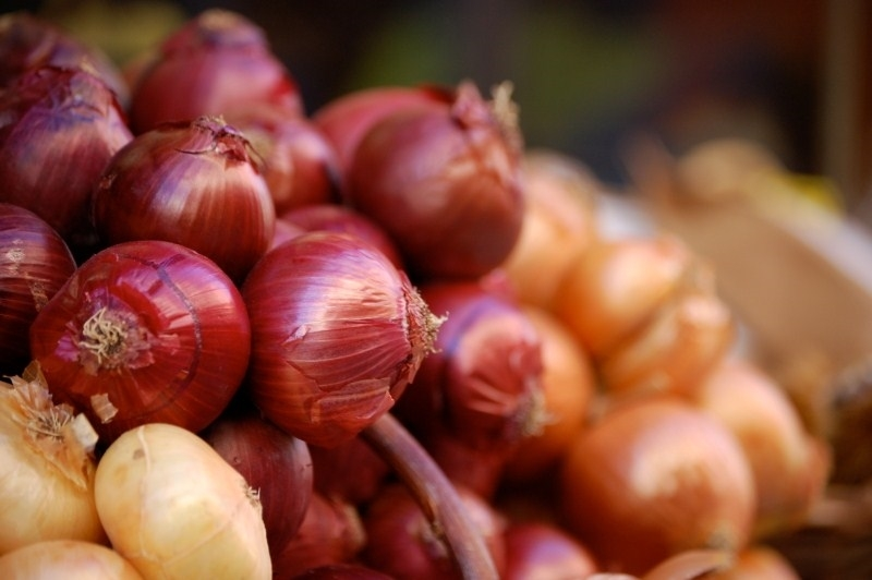 Semina cipolle coltivare orto seminare cipolle for Semina cipolle