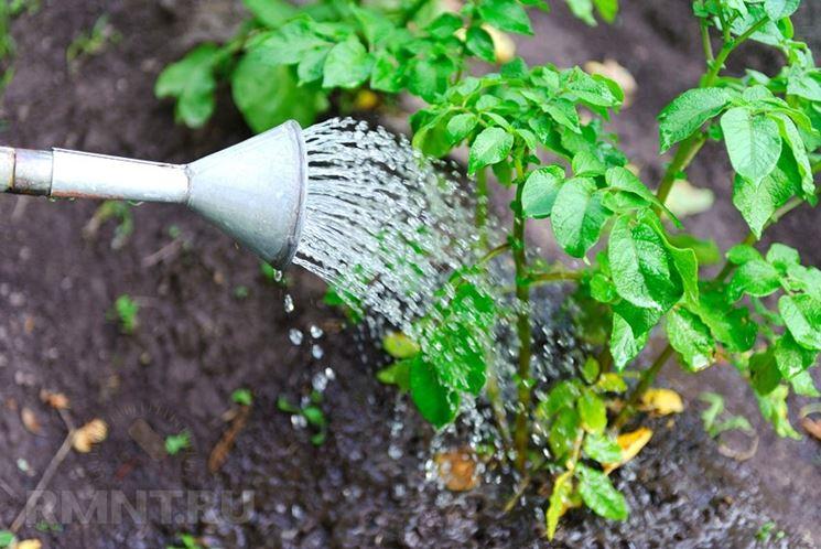 Irrigazione patate