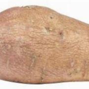 patata americana