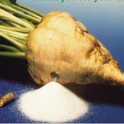 barbabietola da zucchero