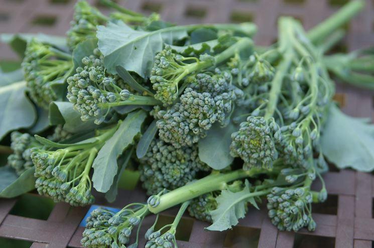 Broccolo varietà