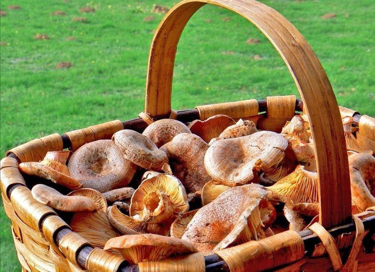 Un cestino di funghi