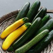 cesto di zucchine