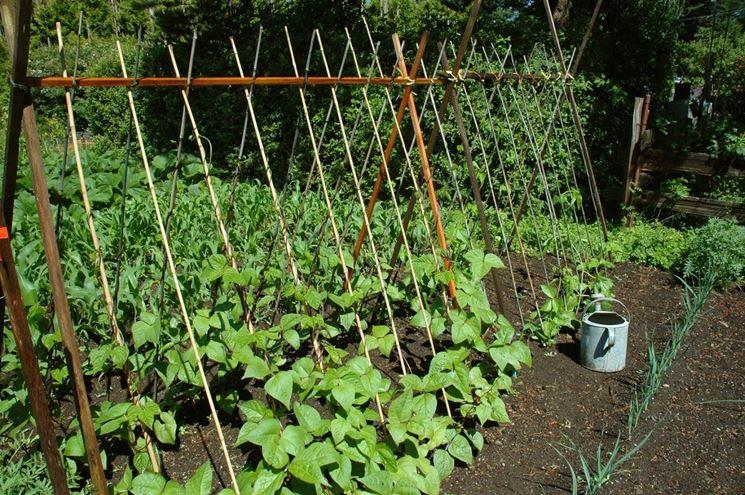 Legumi ortaggi come curare i legumi - Compost casalingo ...