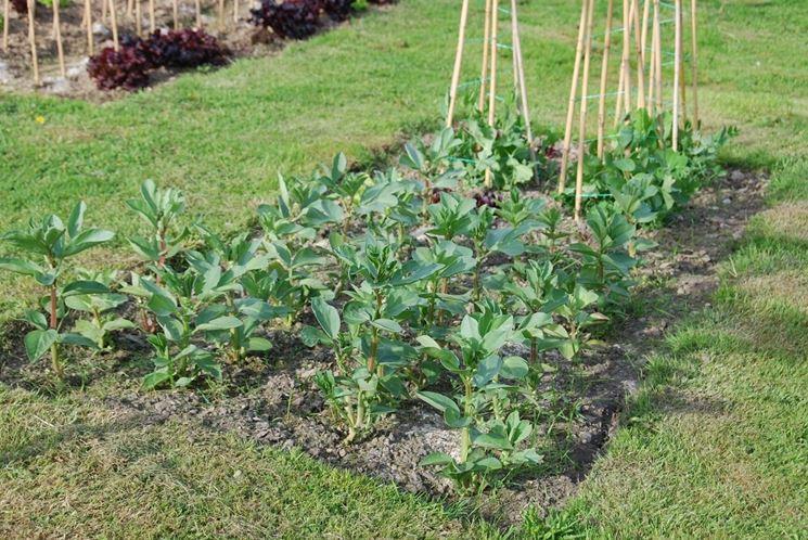 Orticello con sostegni per legumi