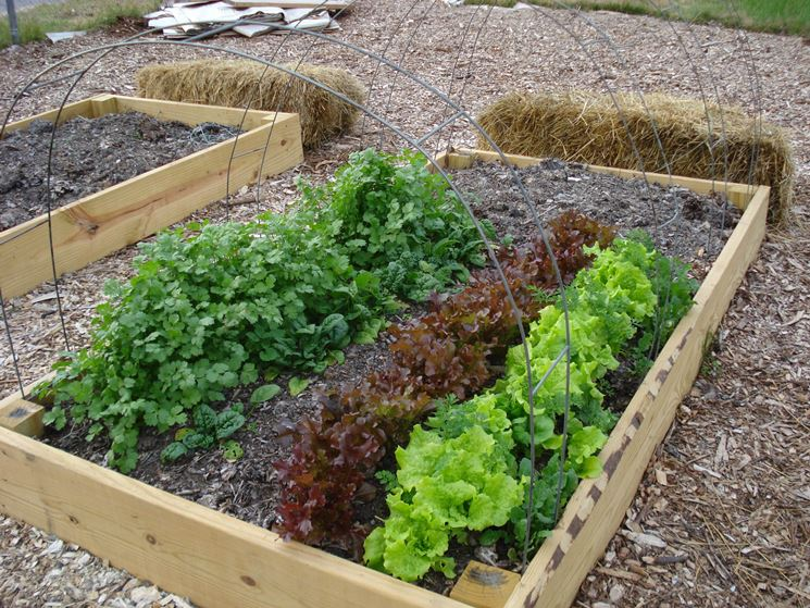 orto giardino ortaggi orto per giardino