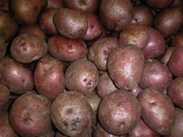 Patate rosse