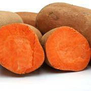 pianta patata