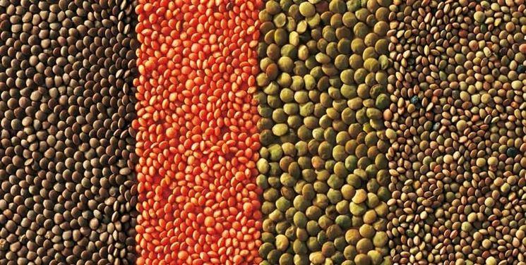 Varietà pregiate di lenticchie