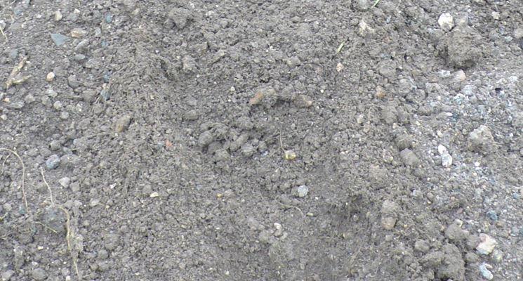 patate nel terreno