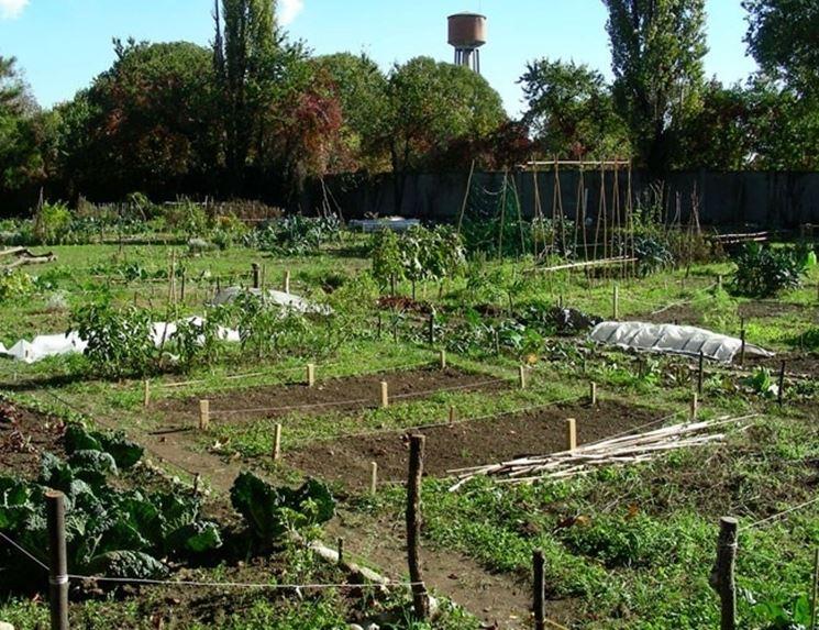 Piante orto ortaggi piante per orto - L orto in giardino ...