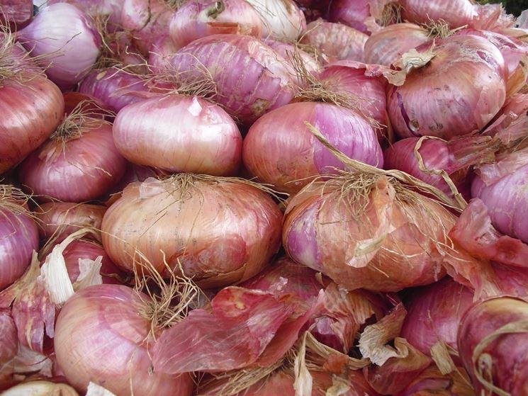 Piante orto ortaggi piante per orto for Semina cipolle