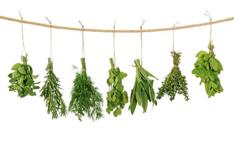 erbe aromatiche appese