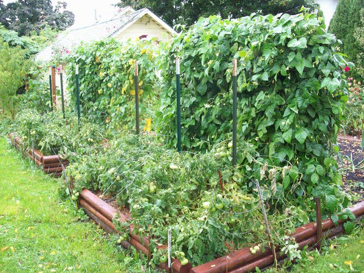 piante da orto verticali