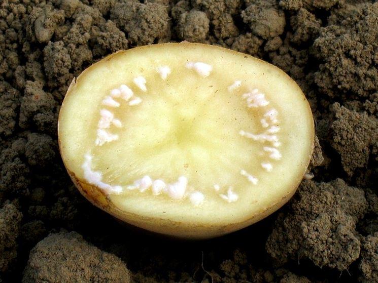 Malattie delle patate