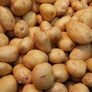 quando piantare le patate
