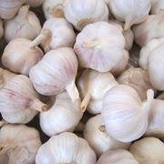 insieme di bulbi di aglio