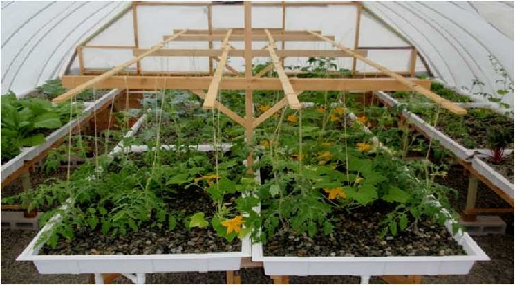 Ampia serra a tunnel con semenzali