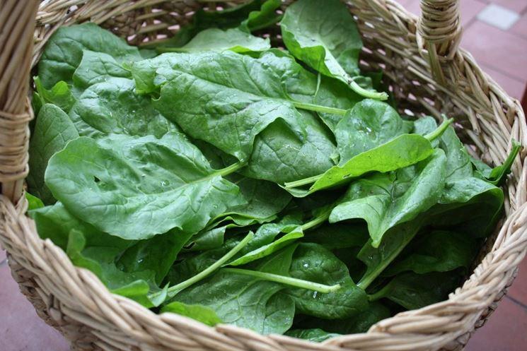 Spinaci e altre verdure invernali