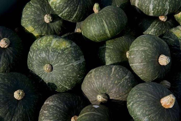 Marmellata di zucca verde