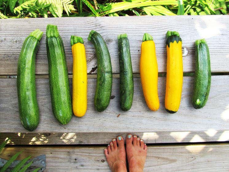 variet� zucchine