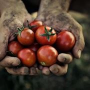 pomodori da agricoltura biologica