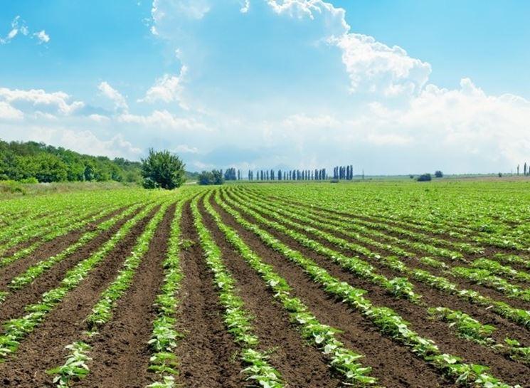azienda da agricoltura biologica