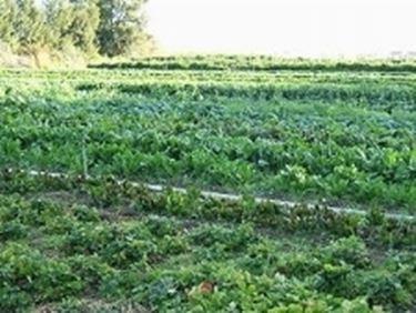 agricoltura biologica2