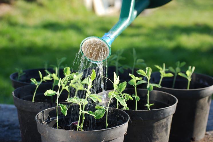 Piantine da coltivazione biologica