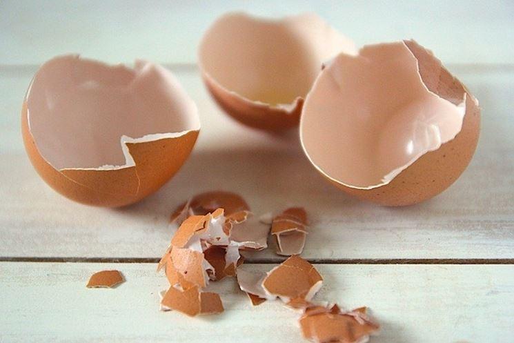 gusci d'uovo