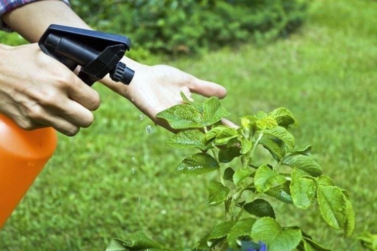Anche gli insetticidi biologici devono essere spruzzati con prudenza