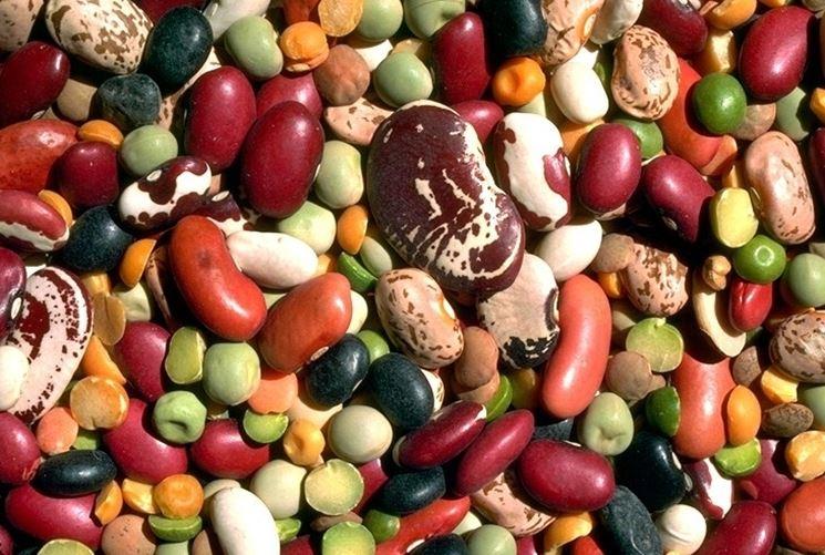 Coltivazione legumi biologici