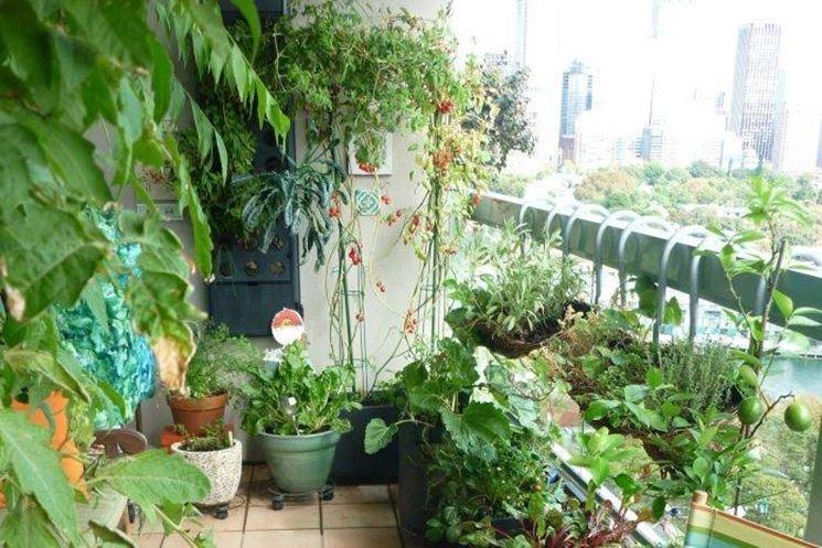 Coltivare orto sul balcone - Orto in terrazzo - Coltivare l\'orto sul ...
