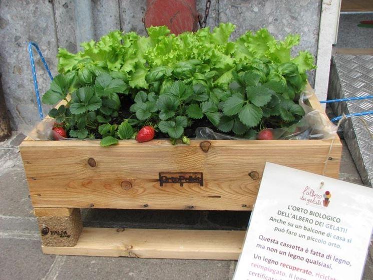 Esempio di un orto in una cassa di legno