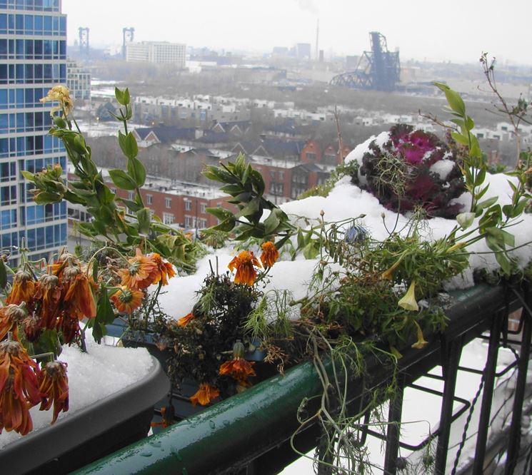 Orto nel balcone orto in terrazzo orto sul balcone - Winter flowers for balcony ...