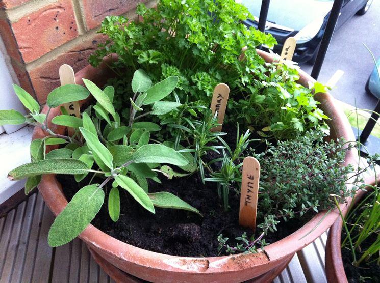 Orto sul balcone cosa piantare orto in terrazzo che for Cosa piantare nell orto adesso