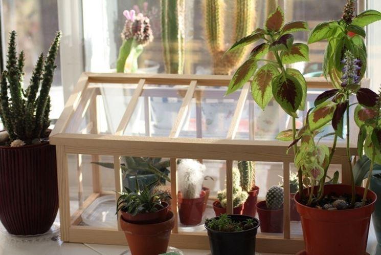 Mini serra sul balcone