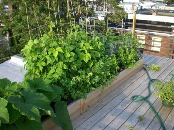 Orto sul balcone kit - Orto in terrazzo - Kit essenziale per lorto sul b...