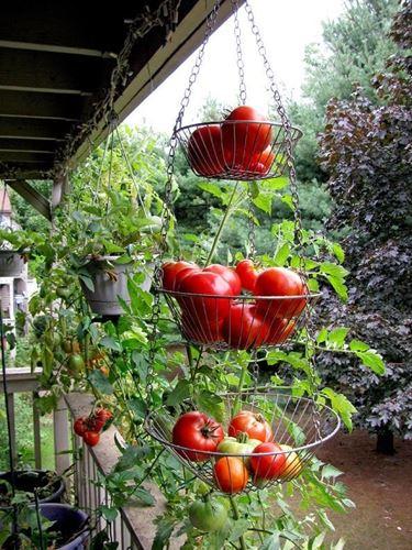 Una tipologia di coltivazione: i contenitori verticali.
