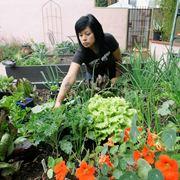 come costruire un orto nel terrazzo