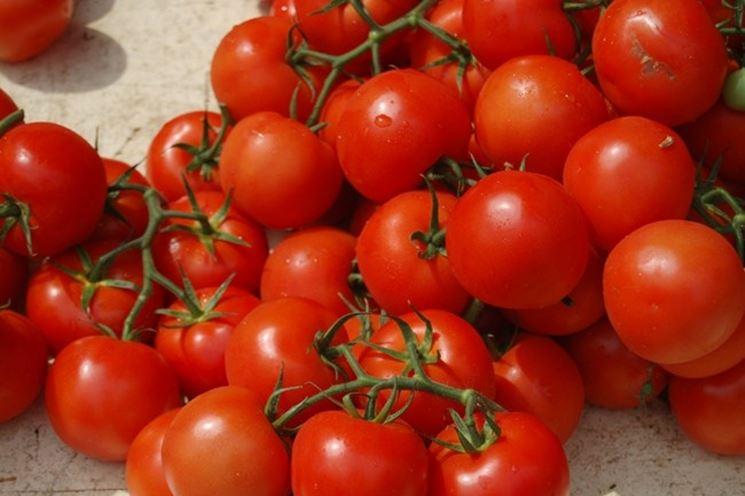 Un bel raccolto di pomodori