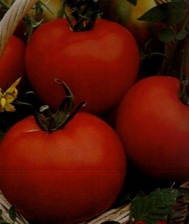 pomodoro tondo