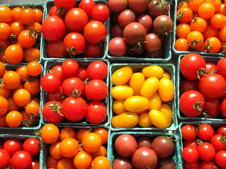 varietà <em>pomodori ciliegino</em>
