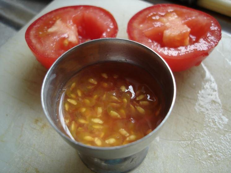 Prelievo semi di pomodoro