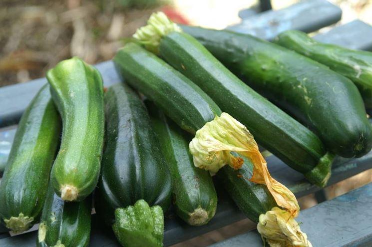Coltivare la zucchina quiz sondaggi for La zucchina